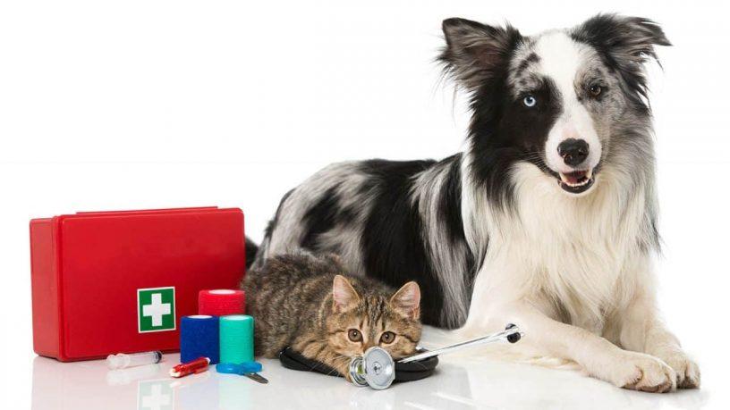 Comment bien s'occuper de son animal de compagnie ?